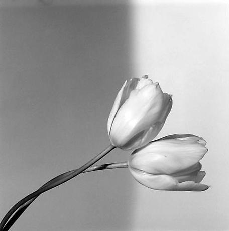 "Robert Mapplethorpe ""Calla Lily Flowers"""
