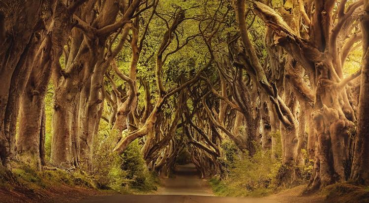 Game of Thrones filming location at Dark Hedges